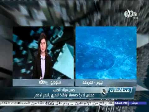 شاهد بالفيديو ظهور اكبر قرش في منطقة الغردقة في مصر