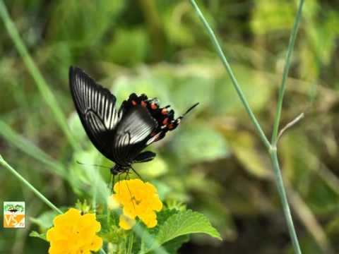 Casa delle farfalle a San Gavino Monreale (Italy - Sardegna - Medio Campidano V4B)