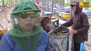 <span>Peternakan Lebah Madu Kembang Joyo TV</span>