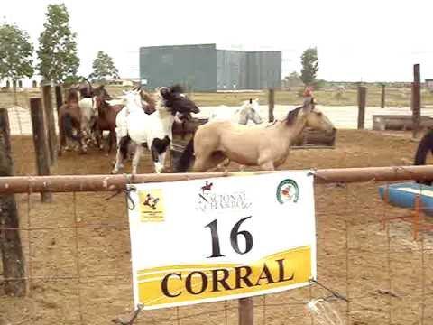 Corral 16