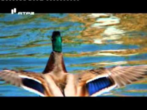 Biosfera Natura Algarve - Turismo Ornitológico