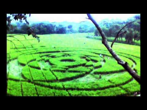 Indonesia crop circles - Sleman Yogyakarta