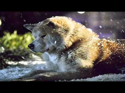 Instrumental Music: Jan A. P. Kaczmarek - Goodbye (Hachiko: A Dog's Story OST)