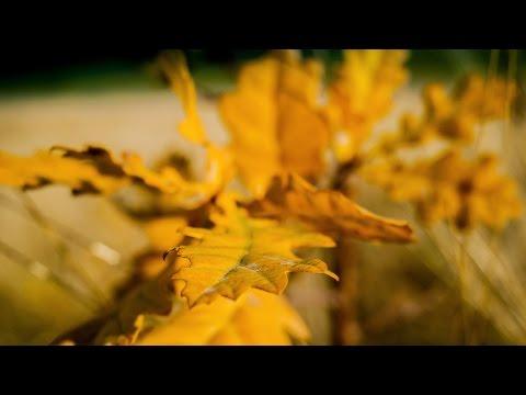 Plantare de toamna pentru Padurea Copiilor - 2 [VIDEO] / 14 noiembrie 2015, 2015