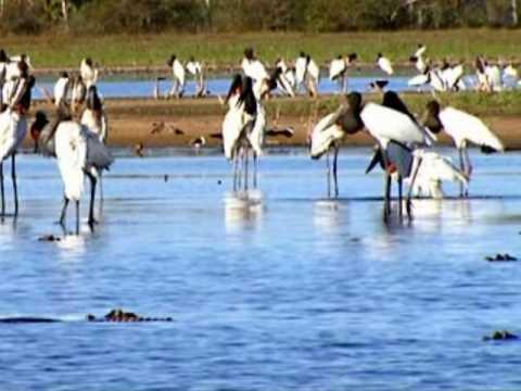 Viagem feita ao Pantanal - O coração da América do Sul.
