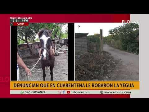 Denuncian que le robaron una yegua y piden ayuda para encontrarla