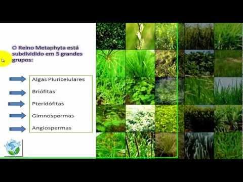 Reino Plantae - Algas Pluricelulares e Briófitas