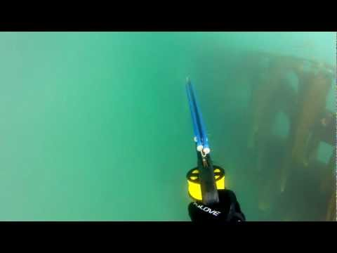 Spearfishing: Trapped Underwater Fighting a 65lb+ White Seabass