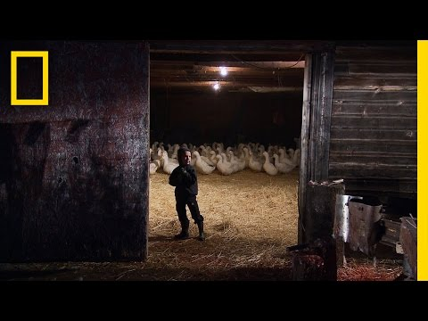 American Colony: Meet the Hutterites - Learning to Work