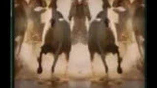 Le galop des chevaux de l'apocalypse 1/4
