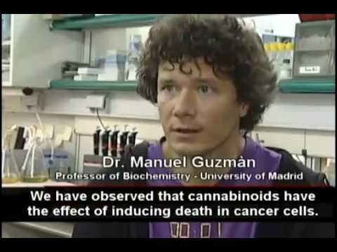 Cannabis - Weed - Pot - Marijuana - Kills Cancer | Les Cannabinoides Tuent Le Cancer