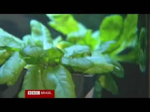 Cientistas encontram pistas sobre a comunicação entre Plantas