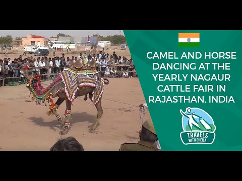 Camel and Horse Dancing at The Yearly Nagaur Cattle Fair in Rajasthan, India - UCjc6e9-23QonhJkM_Cps4Qw