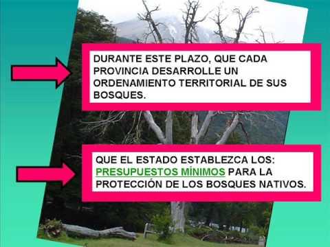 Bosques Nativos y Deforestación.wmv
