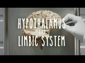 Hypothalamus and Limbic System - UBC Flexible Learning