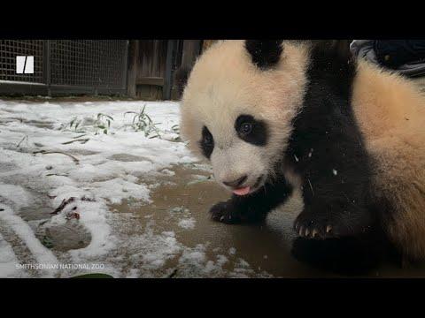 Гулгаж буй пандагийн баяр баясал