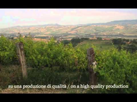 Fattoria Giuseppe Savini - dal 1949 viticoltori a Morro d'Oro