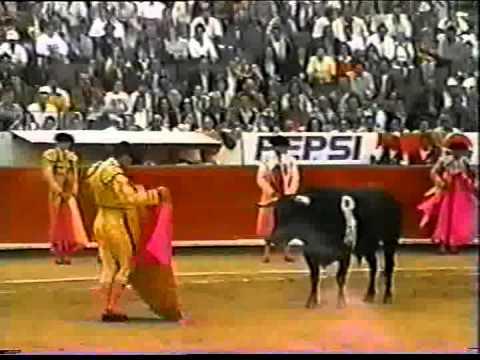 Nuestro toro de lidia 7