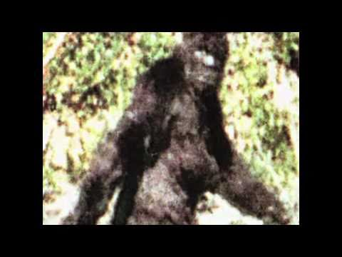 1 of 62 Patterson Gimlin best clips film only no edits