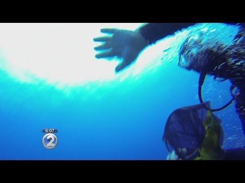 DLNR investigates alleged underwater reef assault caught on video