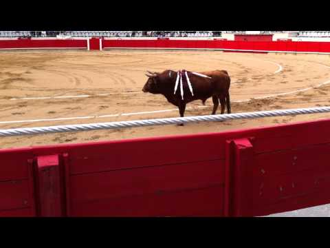 Bullfight - the third stage - planting the banderillas in the bull