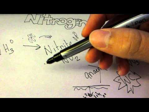 The nitrogen cycle and fish tanks (get rid of algae and stuff)