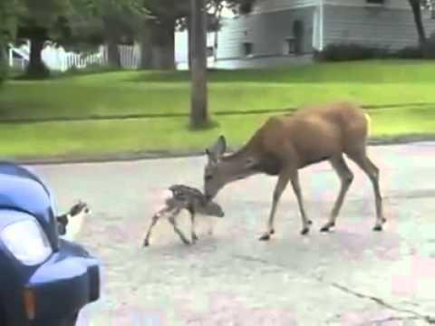 Folk Gang Deer