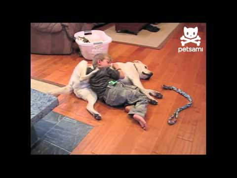Dog and kid back scratching teamwork