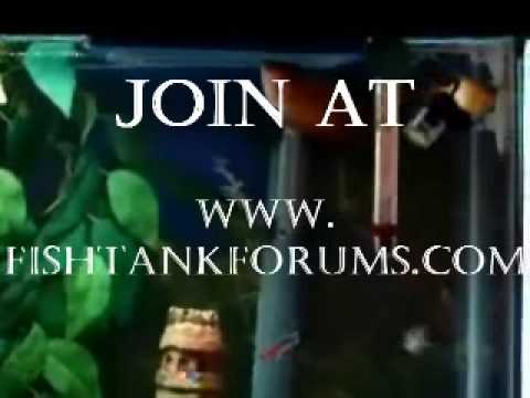 Fishtankforums.com - Video Tutorial Trailer