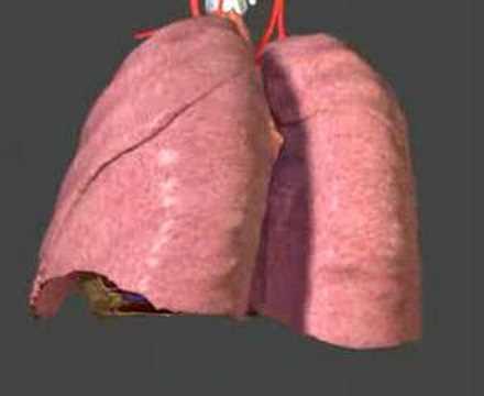 didattica anatomia umana