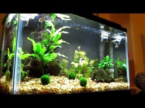 10 gallon Freshwater Aquarium with Live Plants
