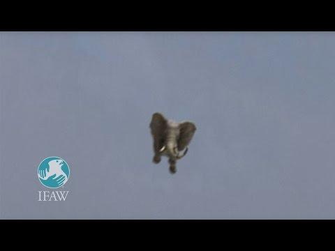 IFAW Germany Amazing Jumbo Elephant Landing - PSA 2009
