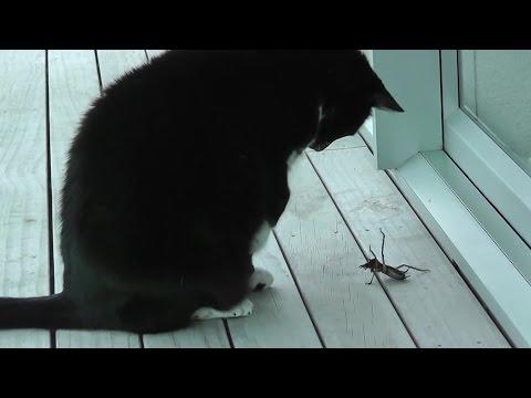 Alien attack my beloved pet