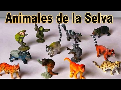 Ingles para niños - Animales de la Selva Tropical - Video Educativo #