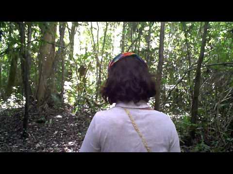 リアル・アマゾンの旅! Part1.ジャングルの中をネイチャーウォーク♪