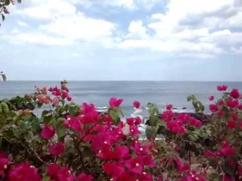 Flores, mar, rocas, mariposas..todo en Playa Hermosa