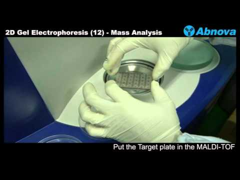 2D Gel Electrophoresis (12) Mass Analysis