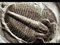 103 - Bones in Stones / Genesis Conflict - Walter Veith