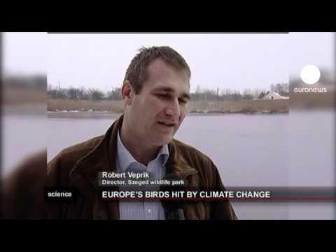 Effetto serra: a rischio centinaia di specie di uccelli