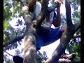 Image Porno Tarzan Vs Anna