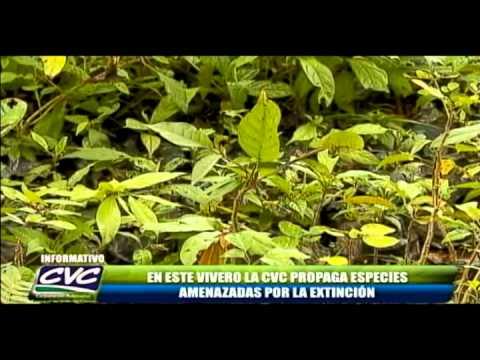 Informativo CVC Programa 40 parte 2 26 de Agosto 2010