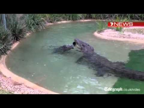 Krokodil protiv kosilice