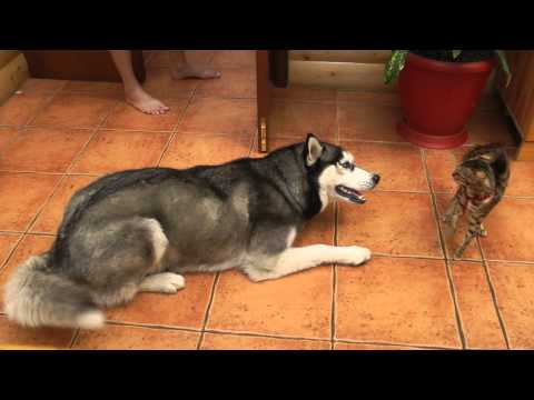 Overly Friendly Dog Really Wants To Play With Hesitant Cat ...