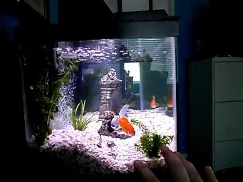 Nitrogen Cycle and Cloudy Aquarium Water Explained. What To Expect In A New Tank.