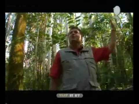 Fundefma restauración bosques ribereños