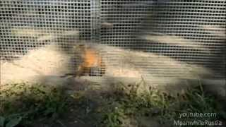 Squirrel Epic Dance in Zoo