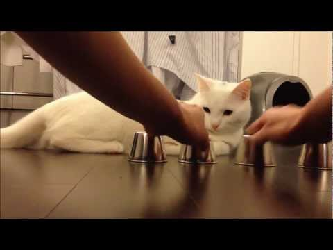 Genialny kot