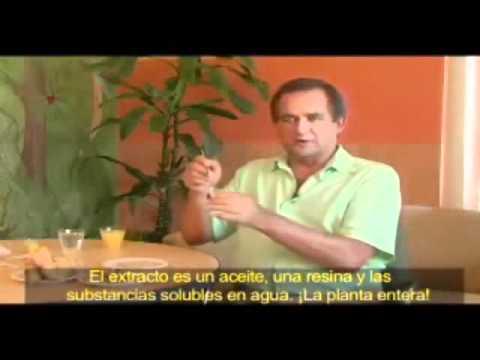 ForeverGreen Costa Rica AMP Tecnología