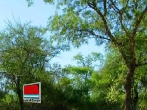 Deforestación en región chaqueña