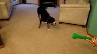 Co robi pies gdy słyszy wuwuzele?